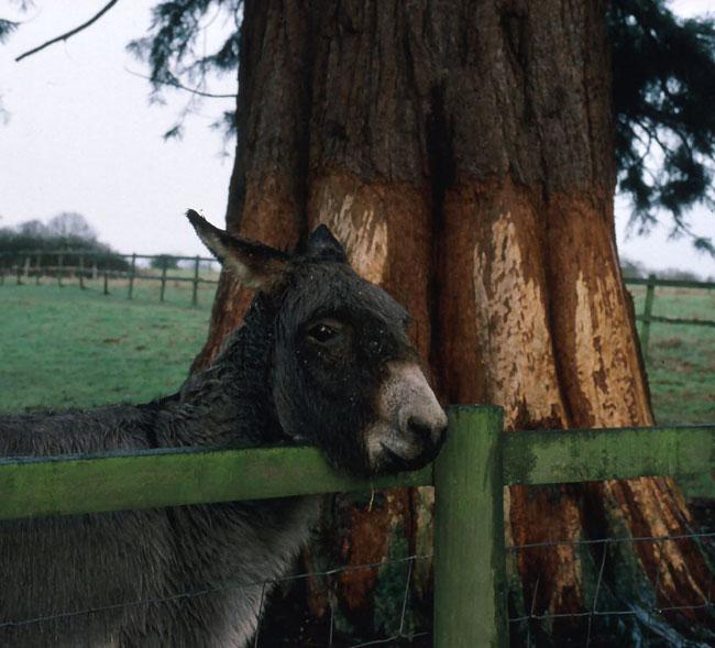 Donkey damage on Sequida