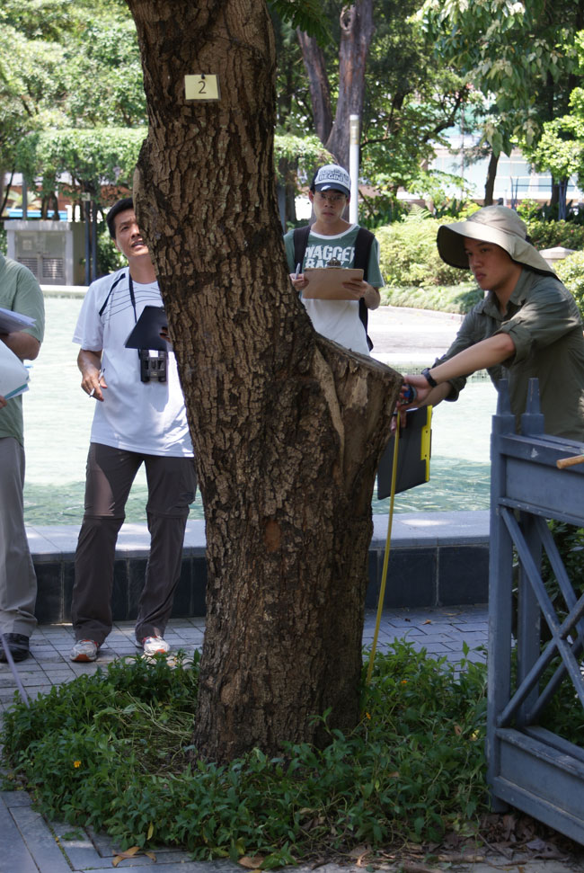 Tree inspection training, Hong Kong